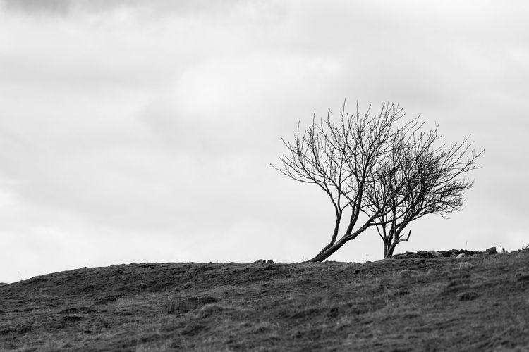 Bare tree on landscape against sky
