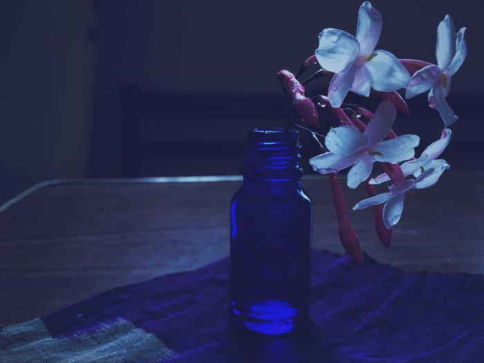Jasmine. The scent, indulgente. Flowers, Nature And Beauty EyeEm Nature Lover Light And Shadow Vacocam