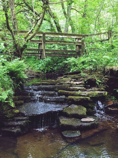 EyeEm Selects Water Moss Nature Forest Green Color Tree Waterfront Growth Outdoors Rock - Object No People Tranquil Scene Waterfall Tranquility Day Beauty In Nature Scenics Bridge Built Structure Green Colour Wet Plant Motion Countryside