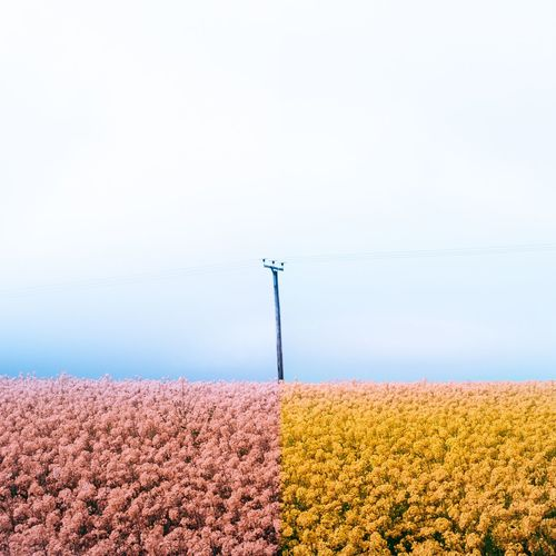 Flowering plants and electricity pylon against clear sky