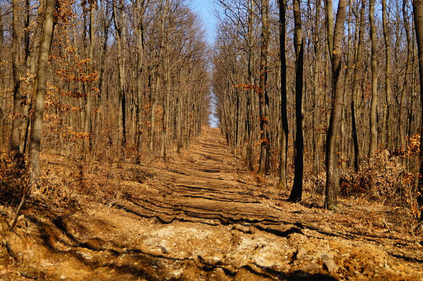 Pathway in the brown, end of winter forest Hills Winter Alley Bare Tree Beauty In Nature Brown Day Forest Nature No People Outdoors Pathway Pilis Pilisszántó Tree Tree Trunk WoodLand