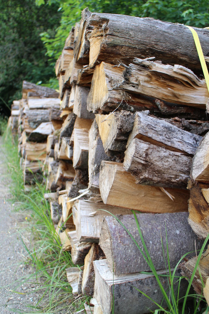 STACK OF LOGS IN A FIELD