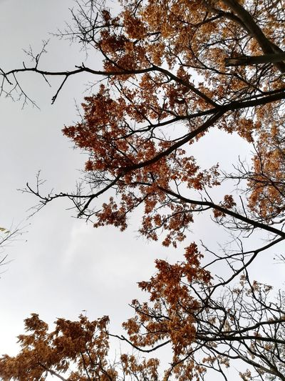 Low angle view of tree against sky during winter