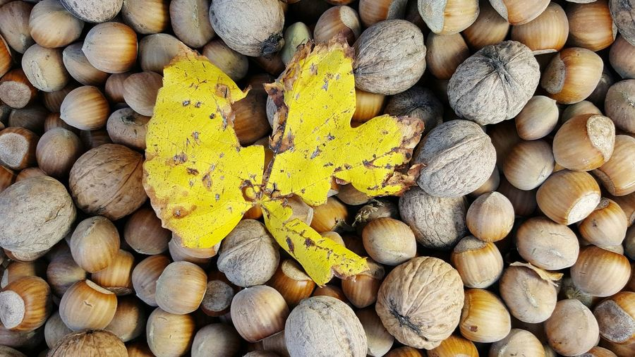 grape leaf on nuts Walnut Nuts Hazelnuts Antioxidant Fall Collection Fall Concept Autumn colors Autumn Leaves Top View Backgrounds Full Frame Heap Textured  Close-up Nutrition