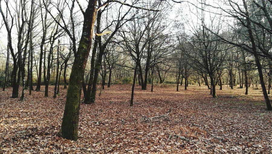 Nature Otoño 🍁 Galicia Carballeira Bosque Mágica