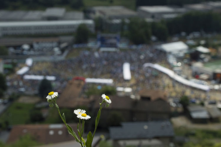 The stage of Pontida 2018 blurred behind a field daisy. Daisies Lega Nord Meeting Pontida Pontida 2018 Salvini Architecture Background Defocus Bokeh Building Flower Flowering Plant Focus On Foreground High Angle View Italian Indipendentist Panorama View People Political Politics And Government Pontida Rally Pontida Selective Focus Sigma 17-50mm Sigma Sd15 Zoom