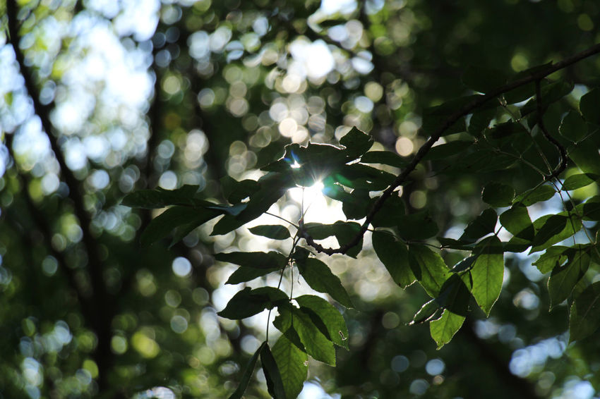 """"""" Breathe """" Green Color Beauty In Nature Branch Close-up Day Growth Leaf Low Angle View Nature No People Outdoors Tree"""