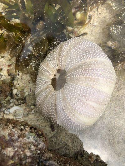 Sea Life One Animal Underwater Sea UnderSea Animal Themes Animals In The Wild