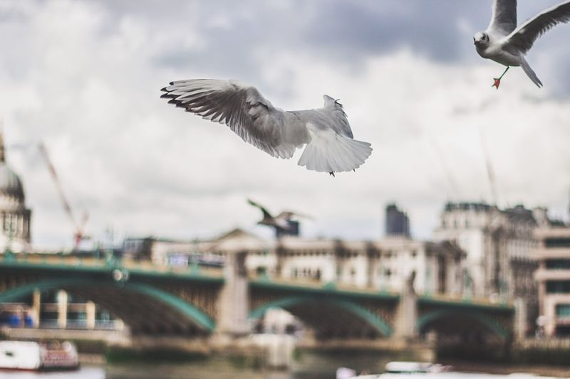 Seagulls Flying Over River In City Against Sky