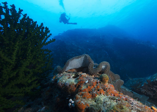 A beautiful dive site at Tenggol Island with superb visibility Scuba Diving Tenggol Island Tokong Timur Dive Site Animal Themes Animals In The Wild Beauty In Nature Fish Marine Life Marine Photography Nature Outdoors Reef Sea Sea Life Soft Coral UnderSea Underwater underwater photography Water
