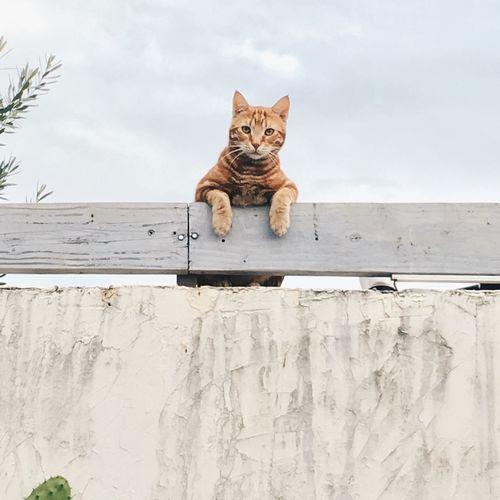 Cat sitting against sky