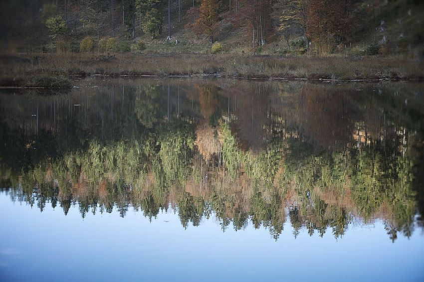 Alsace Autumn Nature Trees Goldencolor Lake Landscapes Reflects In Water Water Yellowcolors