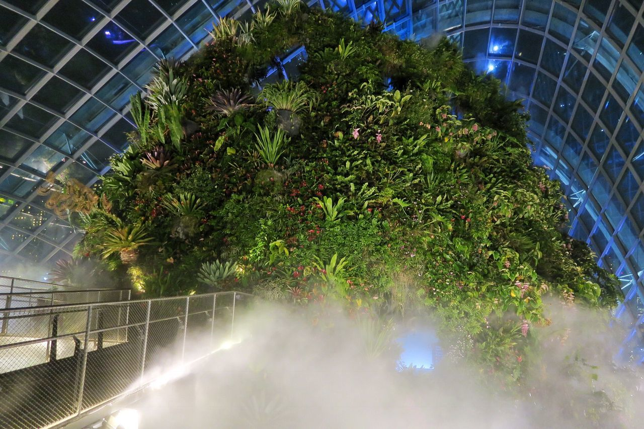 growth, architecture, no people, plant, built structure, outdoors, tree, night, nature, modern, building exterior, city