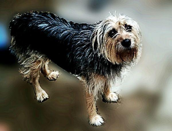 Dog Street Dog