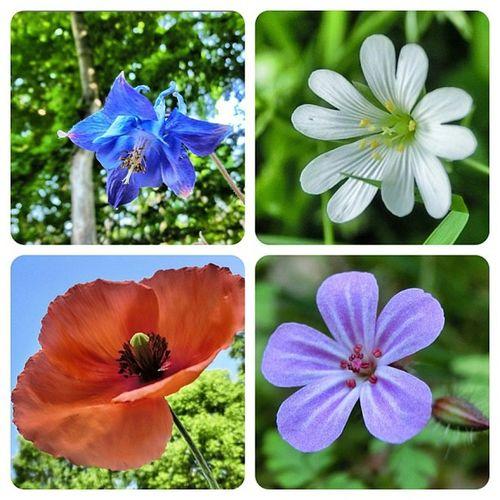 Sklblog Sklfirma Blüten eines Laufes