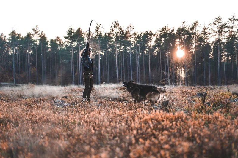 Throwing  Playful Pet Photography  Playful Dog Stick Play Time Playing Plant Tree Pets Domestic One Animal Mammal Animal Domestic Animals Dog Animal Themes Canine Land Vertebrate Sky Field Nature Growth Beauty In Nature Landscape