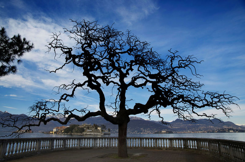 Tree with Branch and Borromean Islands on Lake Maggiore in Piedmont, Italy. Railing Bare Tree Beauty In Nature Borromean Islands Branch Cloud - Sky Day Famous Place Island Lake Lake Maggiore Majestic Mountain Nature No People Outdoors Scenics - Nature Silhouette Sky Tranquil Scene Tranquility Travel Destinations Tree Water