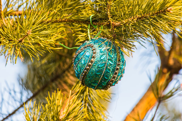Low Angle View Of Bauble Hanging On Christmas Tree