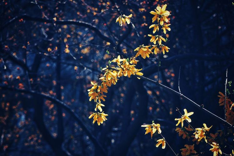 Flower Tranquility Plant Tranquil Scene Tranquil Nature Beauty In Nature Beijing, China Light And Shadow Blue Warm Yellow Flower Tree Flower Branch Leaf Forest Gold Colored Twig Spruce Tree Birch Tree Fir Tree Scenics Idyllic Calm Non-urban Scene