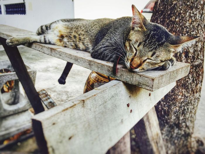Close-Up Of Cat Sleeping On Wooden Plank