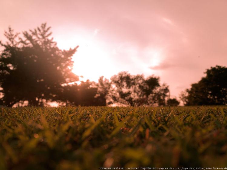 芝生でゴロゴロいい気持ち Sunset Lawn Sky Depth Of Field