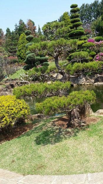 japonese garden Japonesegarden Garden Japonese Tree