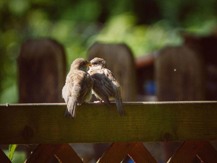 Bird perching on wood