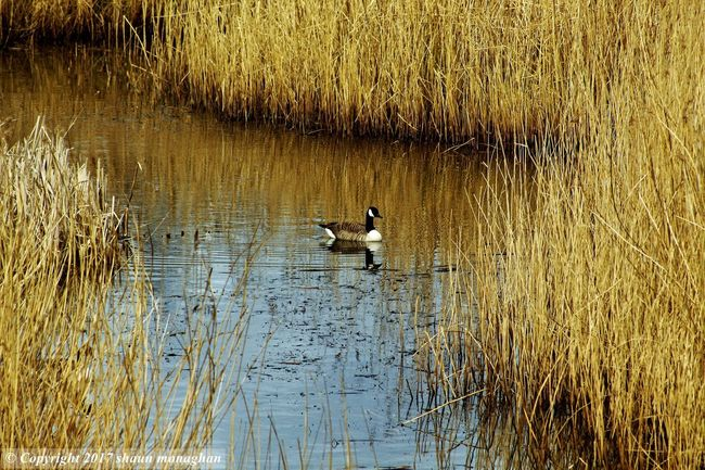 solo duck Animals In The Wild Beauty In Nature Grass Lake Nature One Animal Water Water Bird