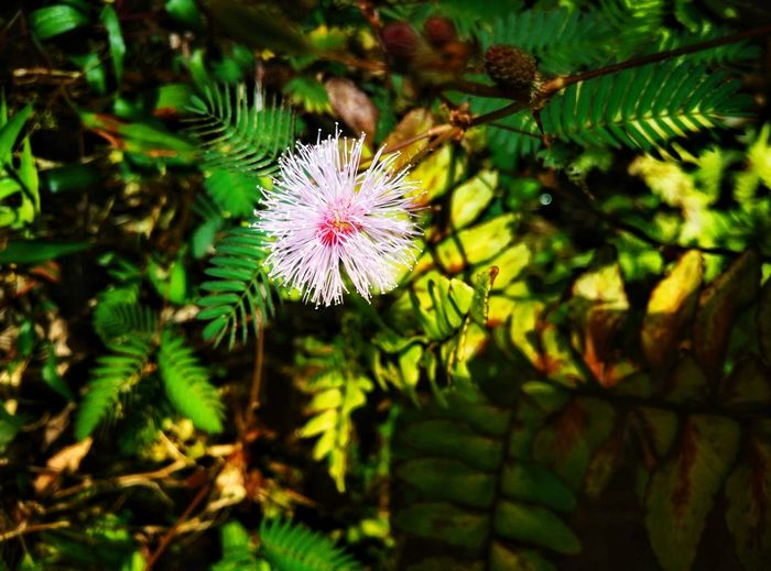 Touch-Me-Not Flower Nature Fragility Plant Growth Beauty In Nature Flower Head Close-up Outdoors Day Petal Freshness No People Leaf Tree EyeEmNewHere