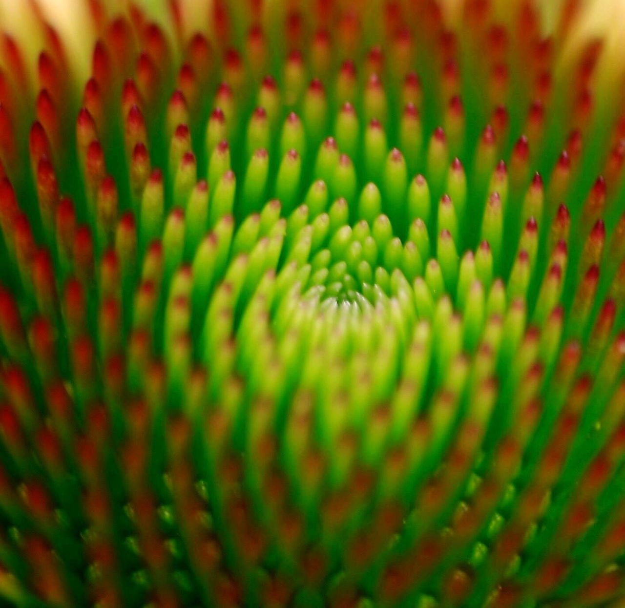 pattern, green color, textured, selective focus, close-up, no people, full frame, abstract, backgrounds, growth, beauty in nature, nature, day