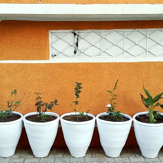The Places I've Been Today Walk This Way Nature Plants Botanic Streetphotography Colors Wallpapersbyidreesy Pots
