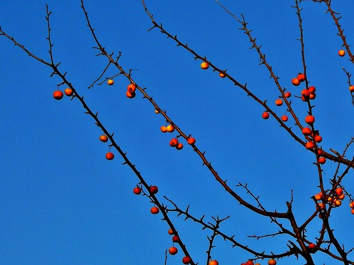 Blue Sky Nature Day Tree Relaxing Feng Shui Chillout Colors Winter Observing Details Of Nature