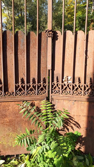 Outdoors Day No People Sunlight Nature Wrought Iron Gate Gate Old Gate Plant Tree Chain Shadow Closed Gate Be. Ready.