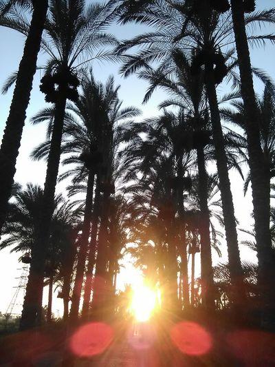 Palm-tree Palm-tree Plant No_people Buety Of Nature Sun Sunset Sky