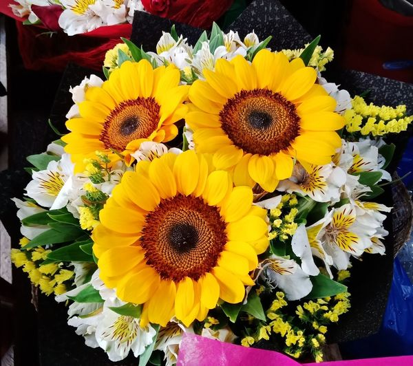 """""""We're all golden sunflowers inside."""" -Allen Ginsberg Eyeem Philippines Beauty Flowers Bouquet Flower Petal Flower Head Freshness Fragility Yellow Beauty In Nature Nature No People Pollen Multi Colored Sunflower Variation Close-up Springtime Outdoors Day Blooming Poppy Flower Market"""