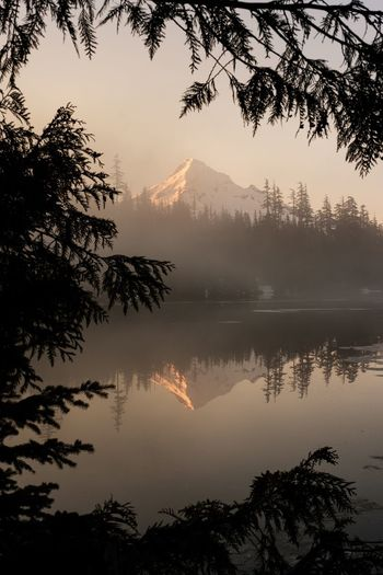 Mt. Hood Tree Mountain Nature Beauty In Nature Scenics Tranquil Scene Lake Mountain Range Reflection Tranquility Idyllic Fog No People Outdoors Sky Silhouette Branch Sunset Water Landscape