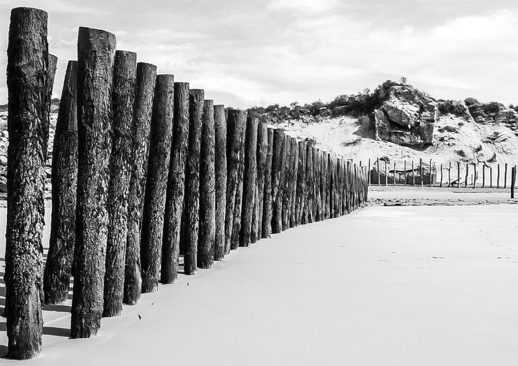 Beach Beauty In Nature Blackandwhite Blackandwhite Photography Diminishing Perspective In A Row Landscape Piles The Way Forward