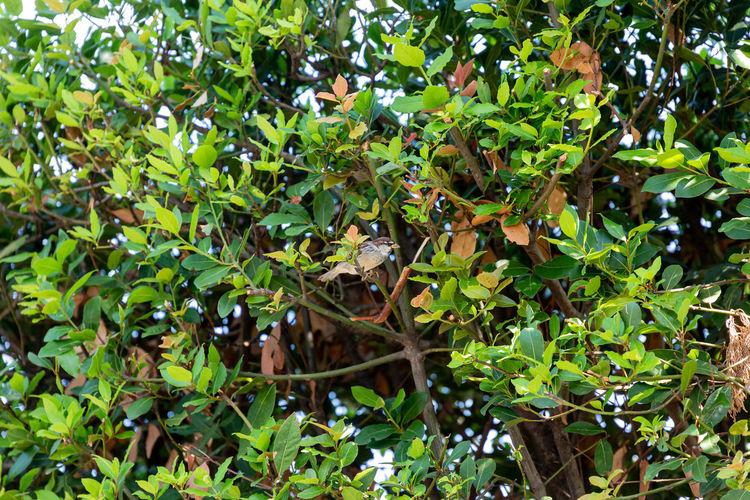 Bird Italy