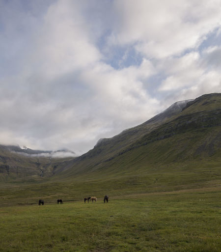 Horses Iceland Animal Themes Cloud - Sky Field Grass Grazing Iceland_collection Landscape Large Group Of Animals Mountain Mountain Range Nature Outdoors Scenics Sky Tranquil Scene Tranquility Wild Horses