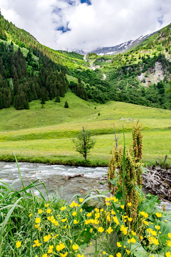 Alpen Plant