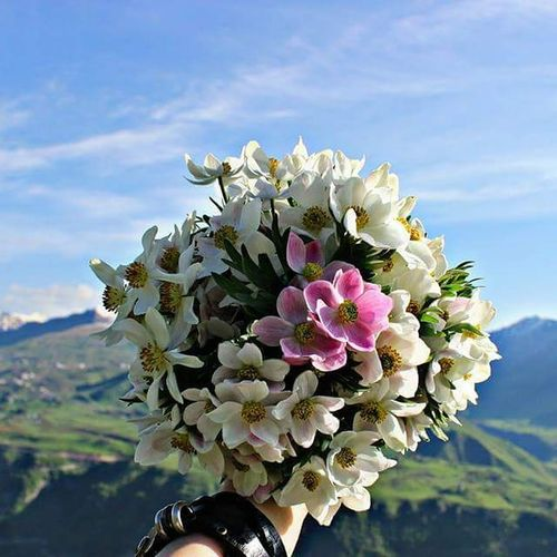 My Hand  Nature Outdoors Beauty In Nature Toking Photos Growth Summer Flower Nature Petal Flower Head Beauty In Nature Fragility Day Plant Close-up Freshness No People Springtime Growth Mountain Bouquet Sky
