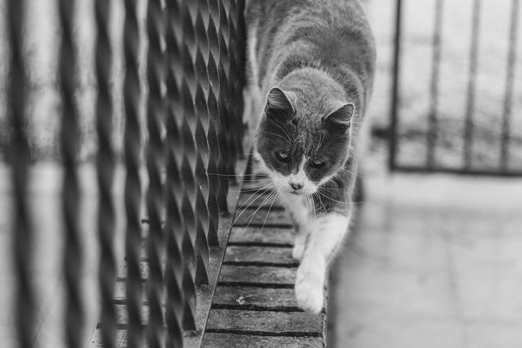 High angle view of cat walking on railing