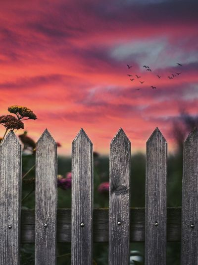 Fence Secure Pink Sunset Wood Wood - Material Flowers Bird Birds Birds In Flight Sky Sunlight Sunrise Sun Austria Summer Nature No People Front View Dust Outdoors Day Clouds Flower Flying