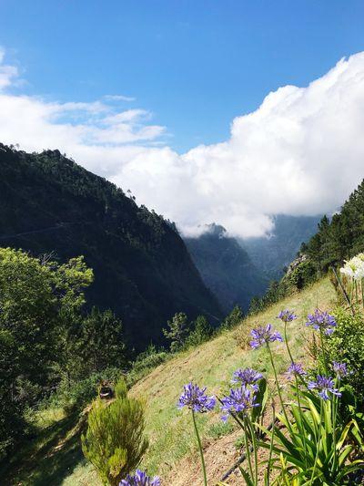 Madeira Plant