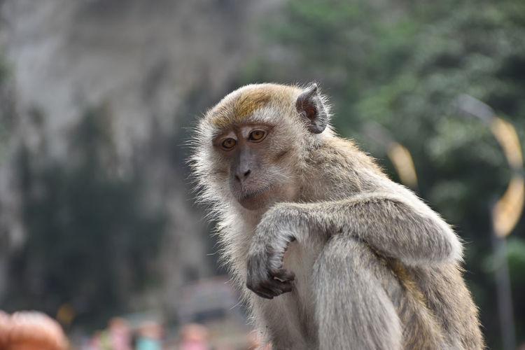 Monkey sitting on outdoors