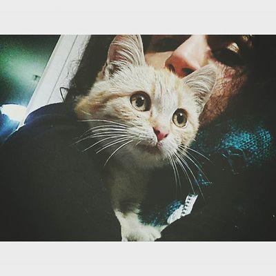 Ohh looove ♡ Cat Catofinstagram Animalover Animal Animals Pet Pets Love Loveu Cucciolo Cucciolotto Tenero Cute Cutest Sweet Sweety  Soymix