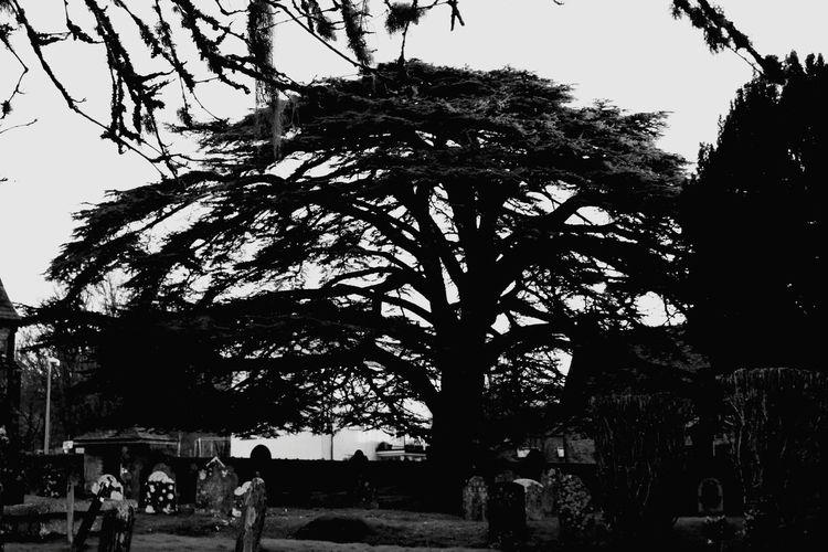 Tree Park - Man