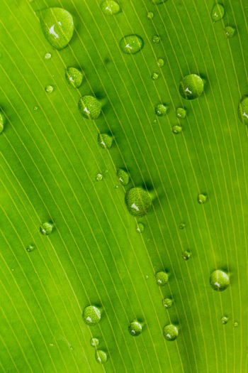 water drop on green leaf background Green Plant Textured  Tree Abstract Backgrounds Close-up Concept Drop Freshness Full Frame Green Color Leaf Leaves Nature Pattern Patterns Water Water Drop Wet