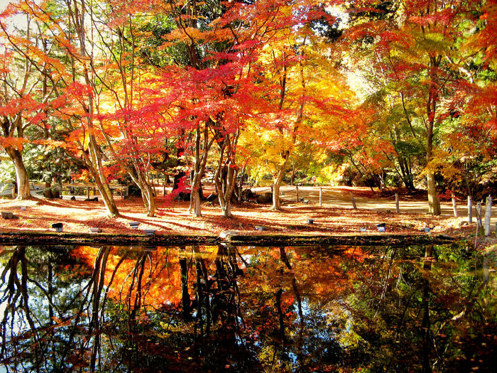Autumn Beauty In Nature Change Day Green Color Leaf Maple Maple Leaf Maple Leaves Maple Tree Nature No People Orange Color Outdoors Red Color Reflection Scenics Tranquil Scene Tranquility Tree Water Yellow Color