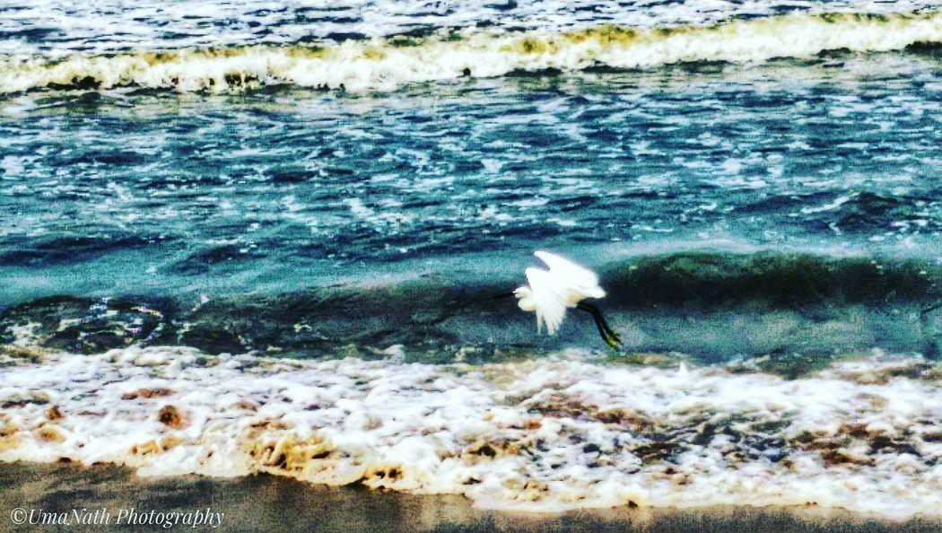 Beauty in Nature EyeEm Best Shots EyeEm Nature Lover EyeEm Selects EyeEm Gallery EyeEm Water Crane - Bird Bird Wave Sea Motion Close-up Horizon Over Water Surf Beach Ocean Sandy Beach Coast Shore Weather Condition Cold Calm EyeEmNewHere